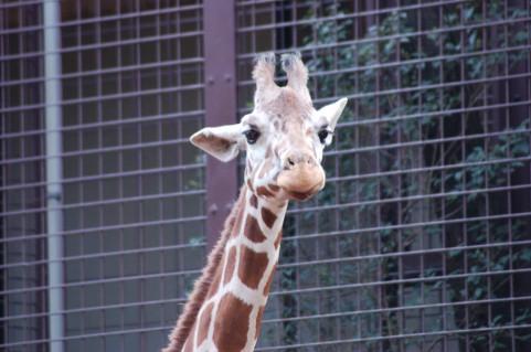 赤ちゃん 動物園