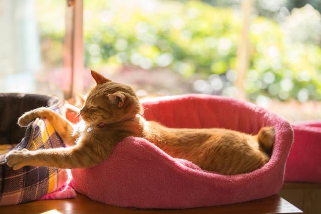 100均 猫ベッド