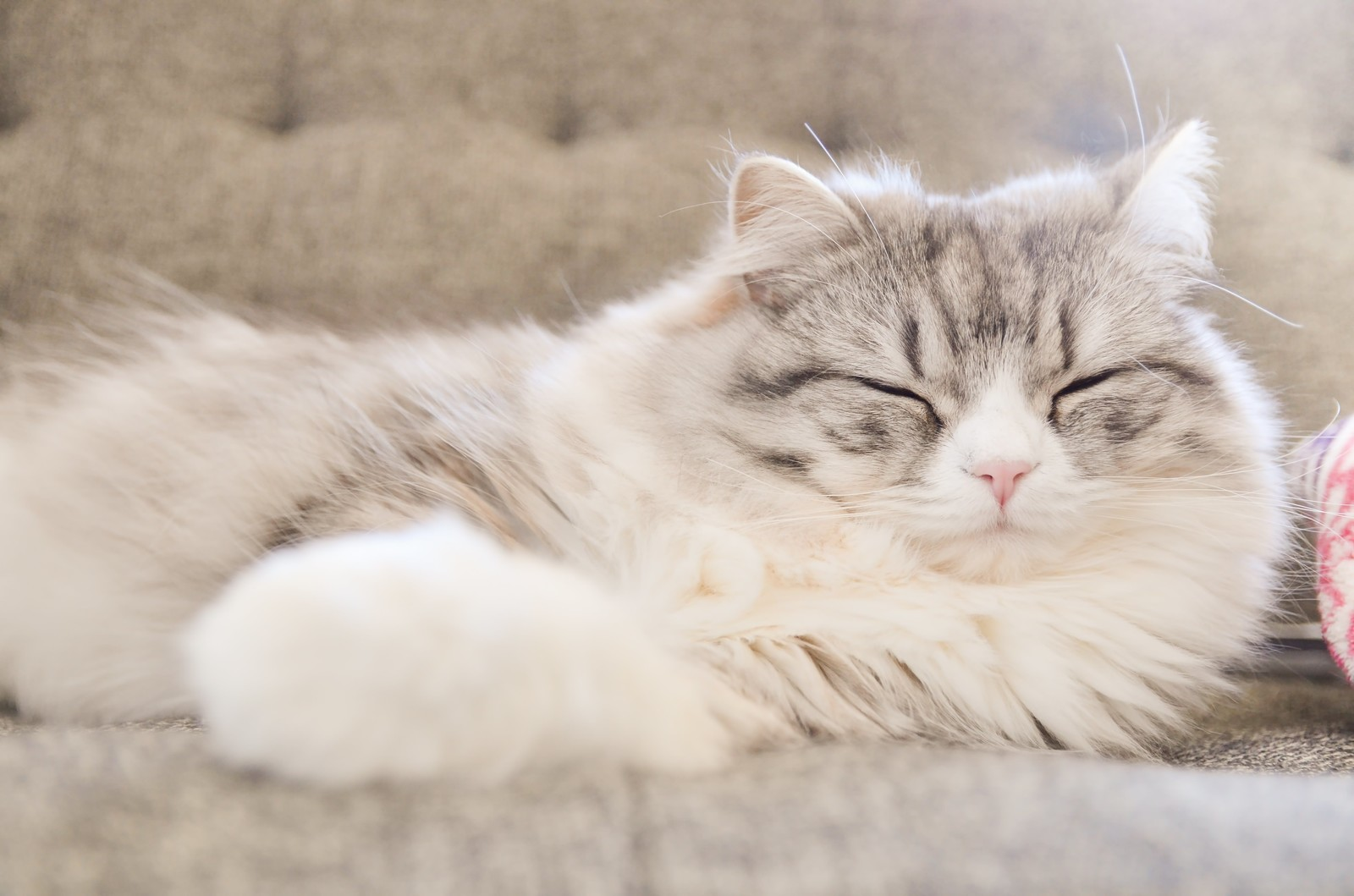 猫 発情期