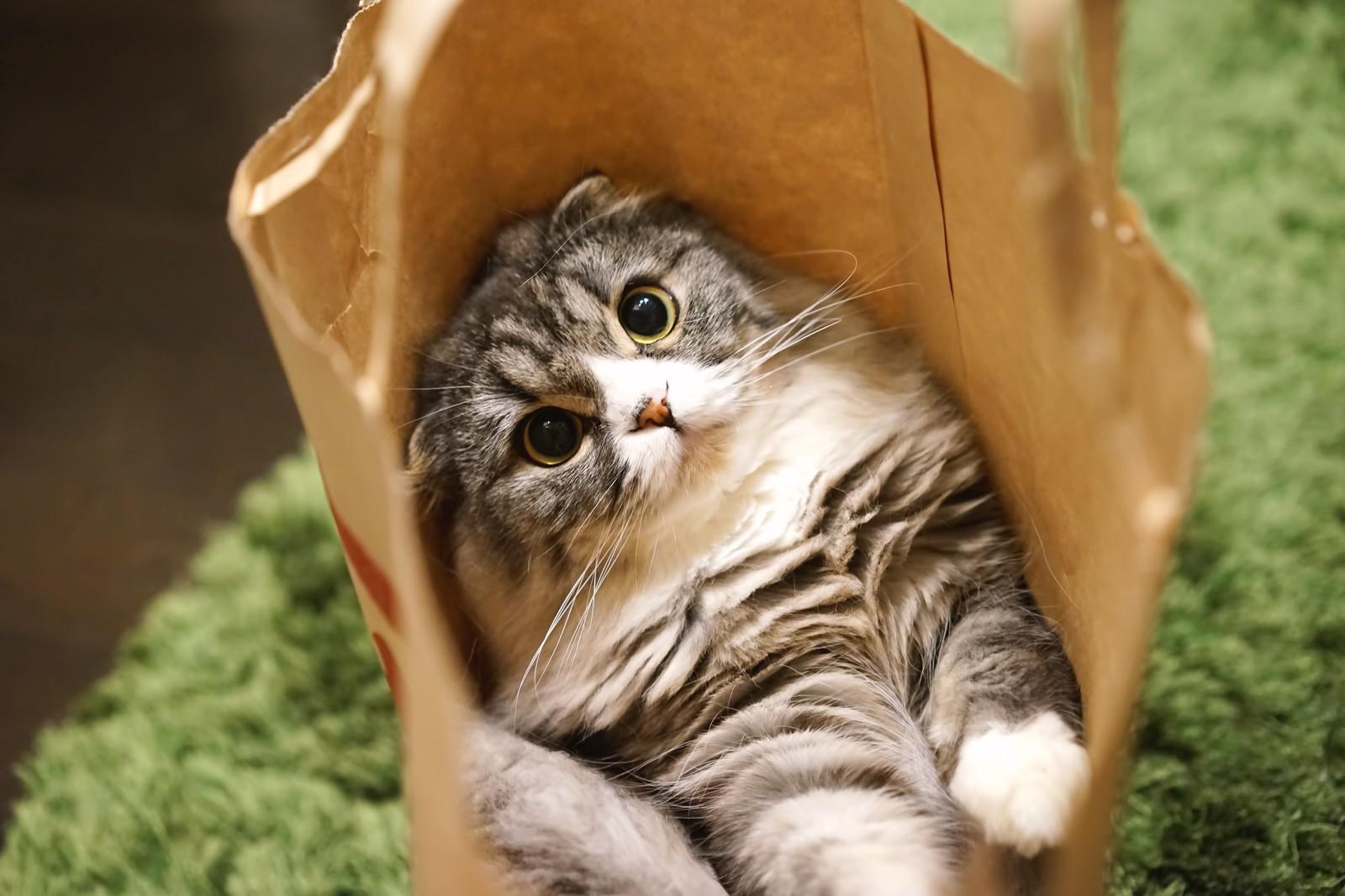 飼いやすい 猫